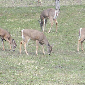 oh deer by sierrajeni