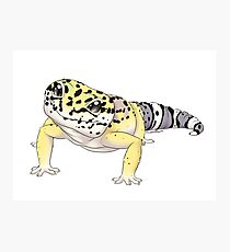 Leopard gecko - Smaug  Photographic Print