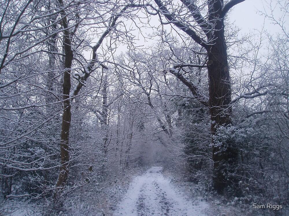 Snowy woodland by Sam Riggs