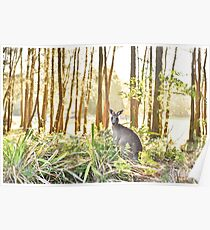 Cute little kangaroo lost in a forest Poster