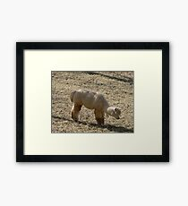 Furry Alpaca Framed Print