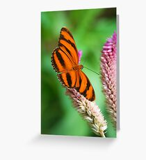 Banded Orange Butterfly I Greeting Card