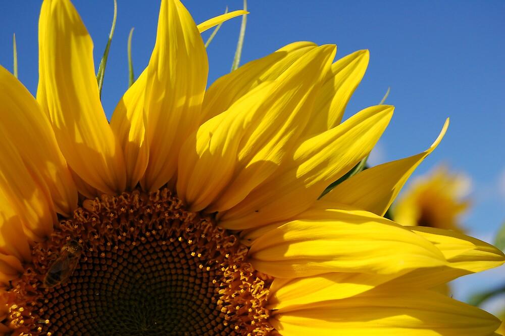 sunny daze by WyeLookAtThis