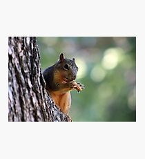 Peanut Perch Photographic Print