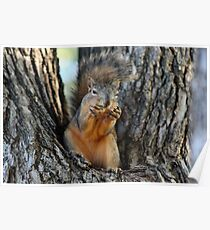 Squirrely Squints Poster
