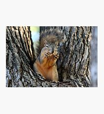 Squirrely Squints Photographic Print