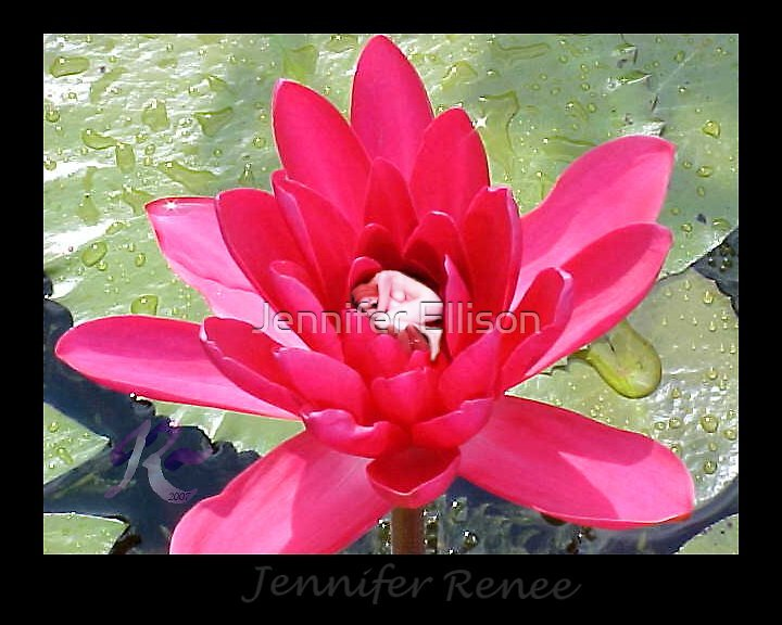 Lotus Faerie by Jennifer Ellison
