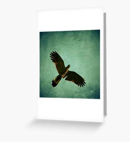 Yellow Tailed Black Cockatoo Greeting Card