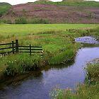 Stream in Kilmartin  by lezvee