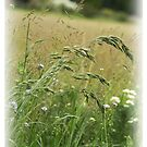 Grasses by Avalinart