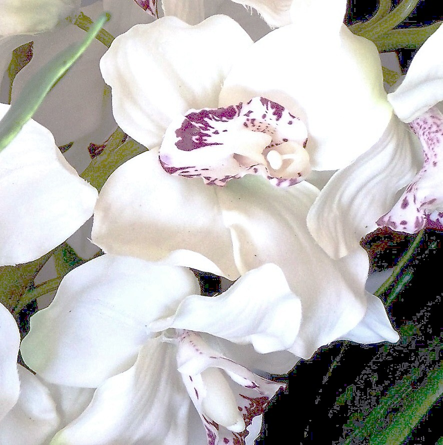 All dressed in white by Judi Taylor