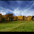 Autumn Splendor by Darrell Sharpe