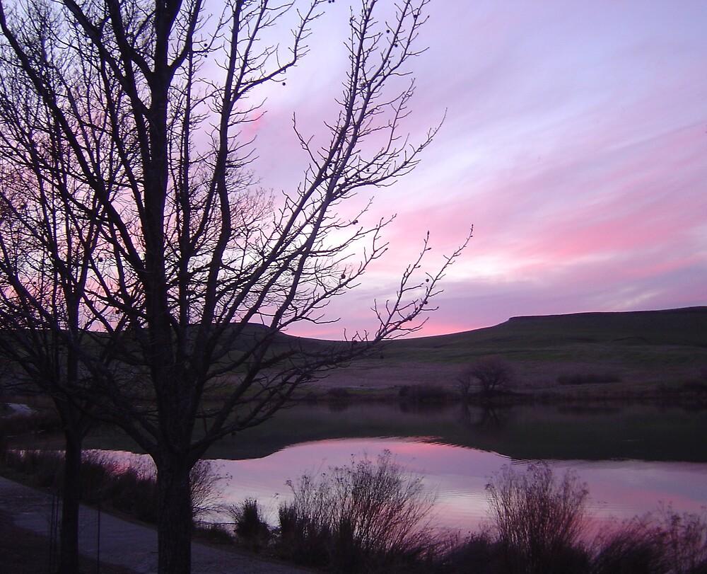 Pink Sunset by Jerry Stewart