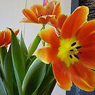Lots of Orange! by MelindaUSA79