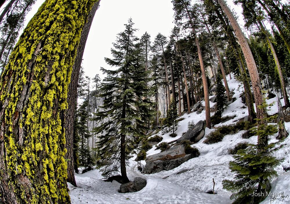 Yosemite by Josh Myers