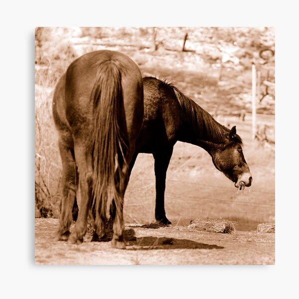 6 Legged Horse  Canvas Print