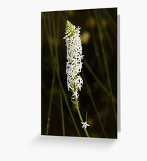 White Candles Greeting Card