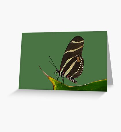 Poise Greeting Card