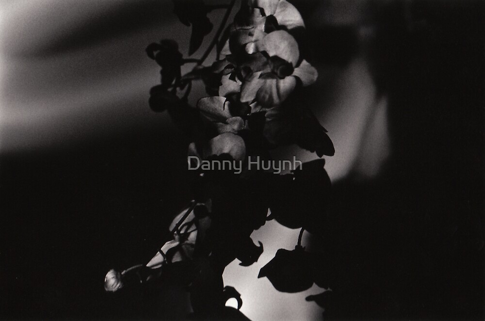 Plant Shadow by Danny Huynh