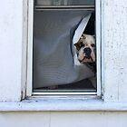 Doggie in the Window by Barbara Wyeth