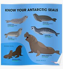 Know Your Antarctic Seals Poster
