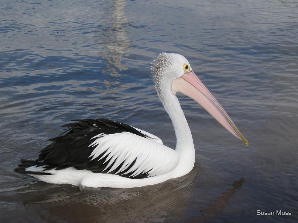 Hello Pelican - Rottnest  Island 3 by Susan Moss