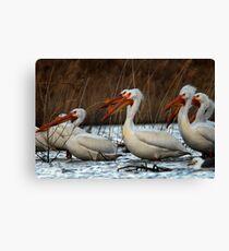 Pelicans - Saratoga Springs, Utah Canvas Print