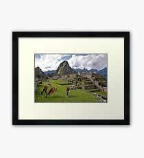 The Llamas of Machu Picchu Framed Print