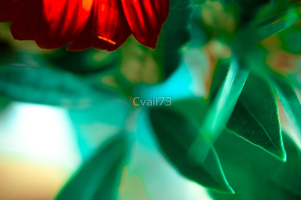 Variations around the flower by Cvail73