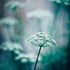Cow Parsley with Textures by Janet Broughton