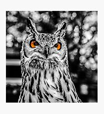 The Angry Owl Photographic Print
