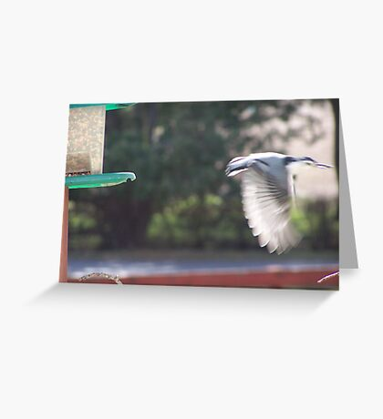 Fly away Nuthatch Greeting Card