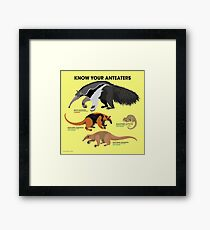 Know Your Anteaters Framed Print