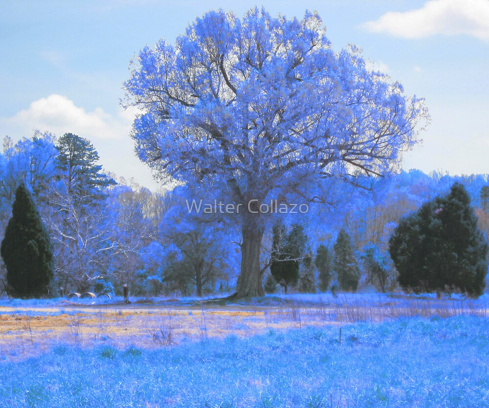 The Big Blue Tree by Walter Collazo