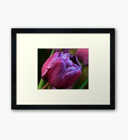 Plum Framed Print
