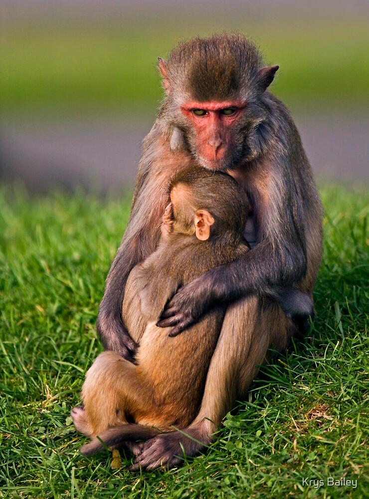 Mother Love (Rhesus Monkeys) by Krys Bailey