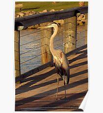 Big Bird Walks on an Indian River Pier Poster