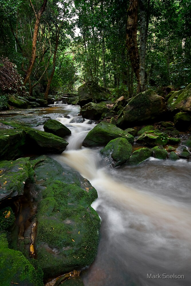 Brisbane Water National Park 2 by Mark Snelson