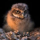 Baby Burrowing Cuteness by Sue  Cullumber