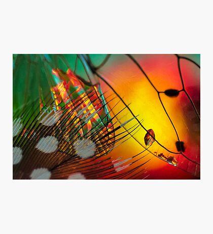 Lurking in Plain Shadow Photographic Print