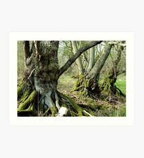 The Bog Oak Three Art Print