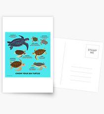 Postales Conozca a sus tortugas marinas