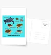 Know Your Sea Turtles Postcards
