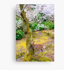 Japan Cherry Blossom Deer Canvas Print