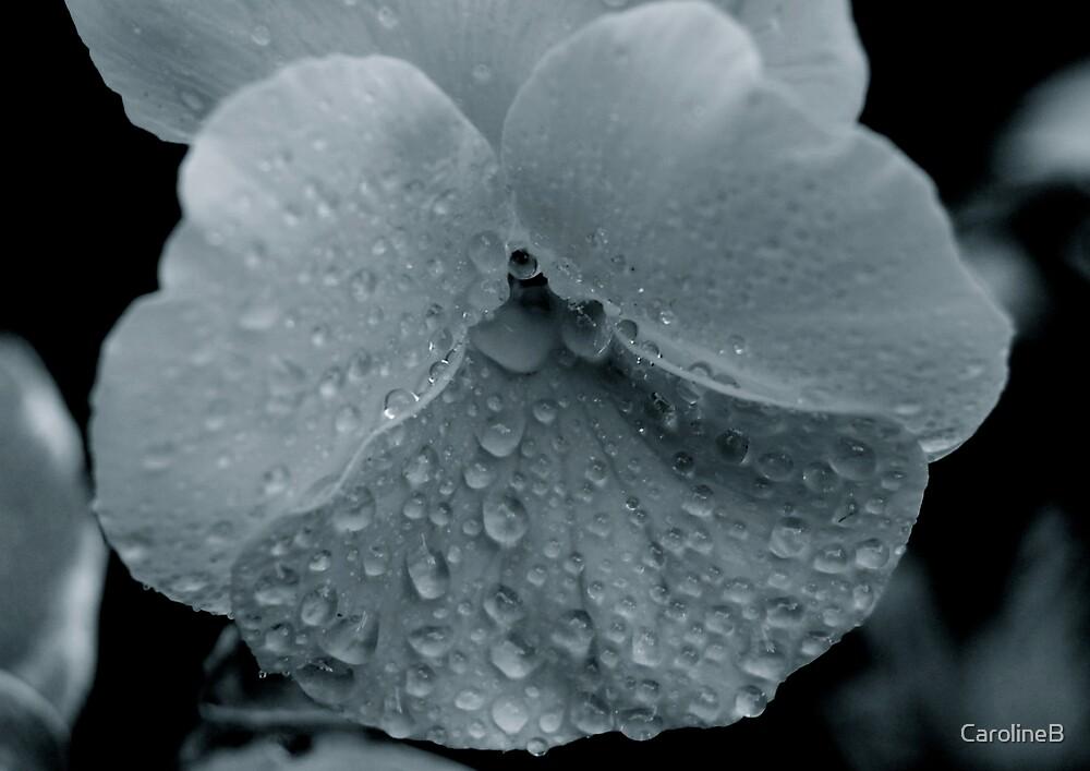 April showers by CarolineB