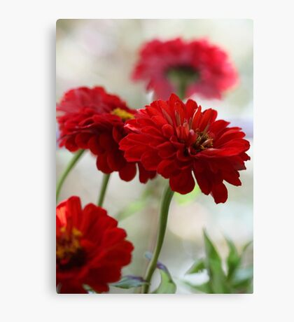 Red Zinnias - In A Vase By The Window Canvas Print