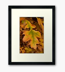 Autumn Born Framed Print