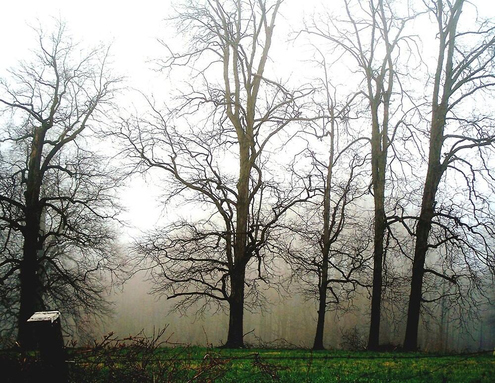Mystical Fog by Judi Taylor