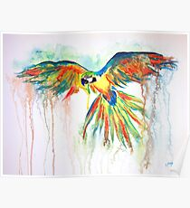 Watercolor Parrot Poster