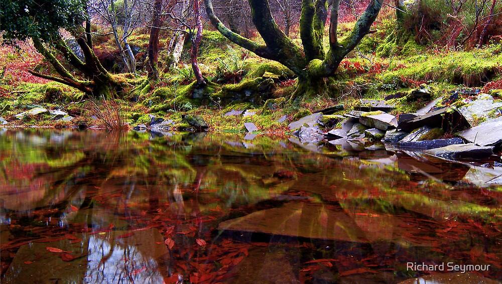Slate Pond by Richard Seymour